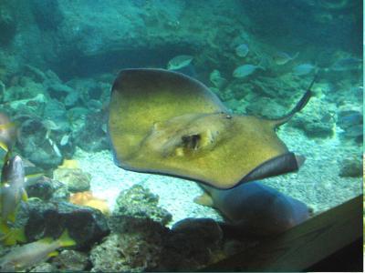 L 39 insolite en france guide photos informations tourisme for Aquarium insolite